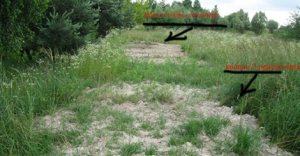Massengräber bei Wolodymyr-Wolynskyi (Foto Sarah Honig's Blog)
